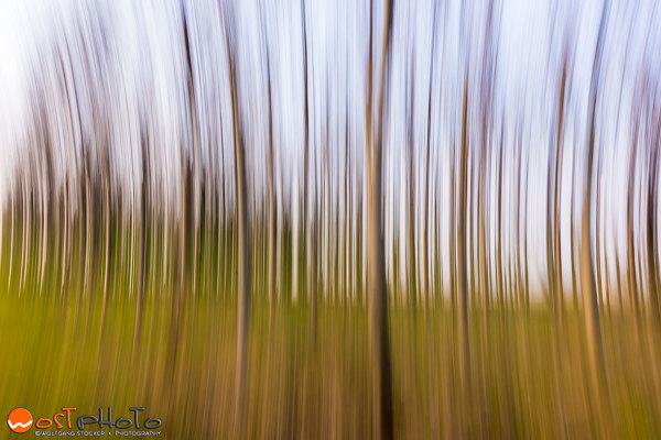 Panning the forest